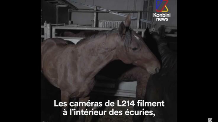 Comment les anciens chevaux de course finissent à l'abattoir, la vidéo de L214 et Hugo Clément