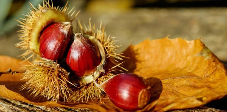 Quelle est la différence entre les châtaignes et les marrons ?