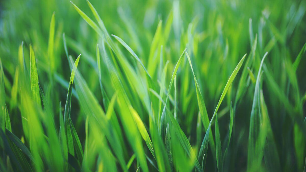 Te encanta el olor a hierba cortada: ¿qué significa?  : Mujer actual El MAG
