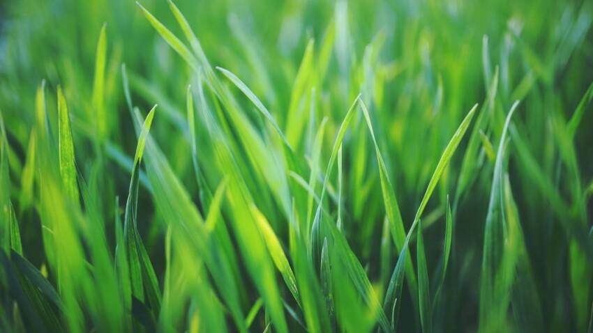 Vous adorez l'odeur de l'herbe coupée : qu'est-ce que cela signifie ?