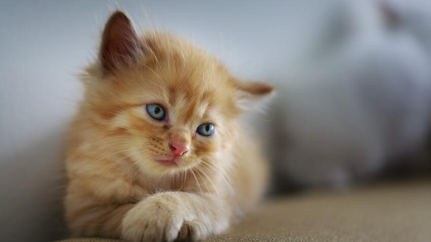 """Pourquoi a-t-on envie de """"croquer"""" les bébés et les chatons mignons ?"""