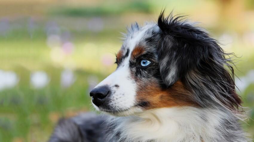 Les 5 chiens préférés des français en 2018