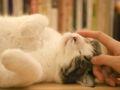 Les chats vont-ils vers les gens qui ne les aiment pas ?