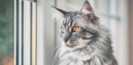 12cfd7e75d2fe Apprenez à décoder les manies de votre chat   Femme Actuelle Le MAG