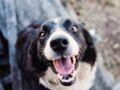 Comment faire taire son chien (nos astuces anti-aboiements)