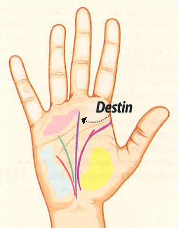 b4f725bf04 Chiromancie : comment lire l'avenir dans les lignes de la main ...