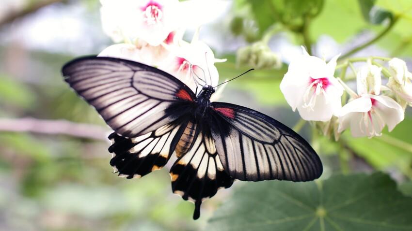 Les terribles conséquences de la disparition des insectes