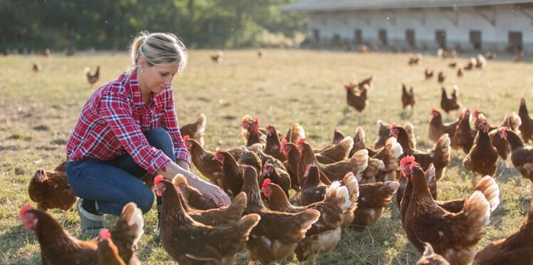 Faut-il créer un label pour le bien-être animal comme aux Pays-Bas?
