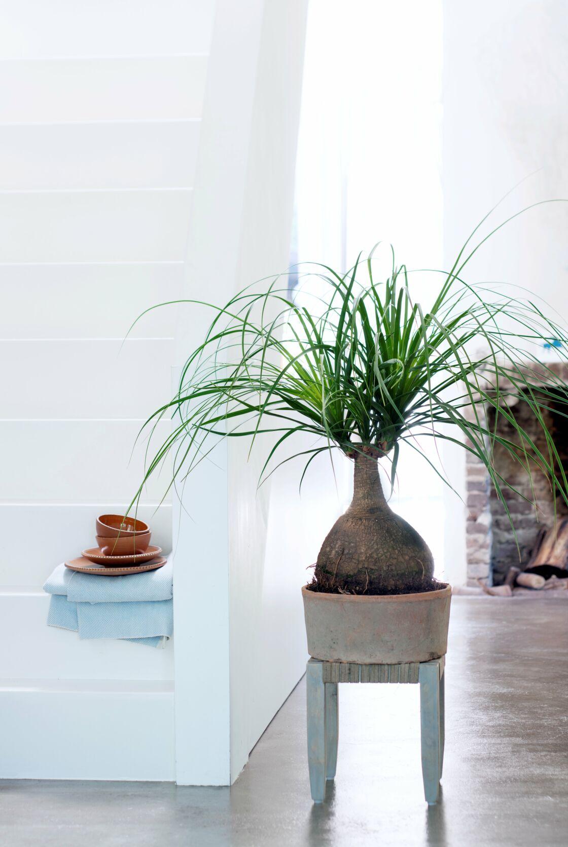 Plante D Intérieur Qui Aime La Chaleur comment bien choisir ses plantes d'intérieur ? : femme