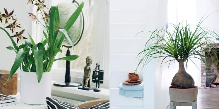Comment bien choisir ses plantes d'intérieur ?