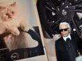 Mort de Karl Lagerfeld : le créateur a-t-il le droit de léguer son héritage à son chat, Choupette ?