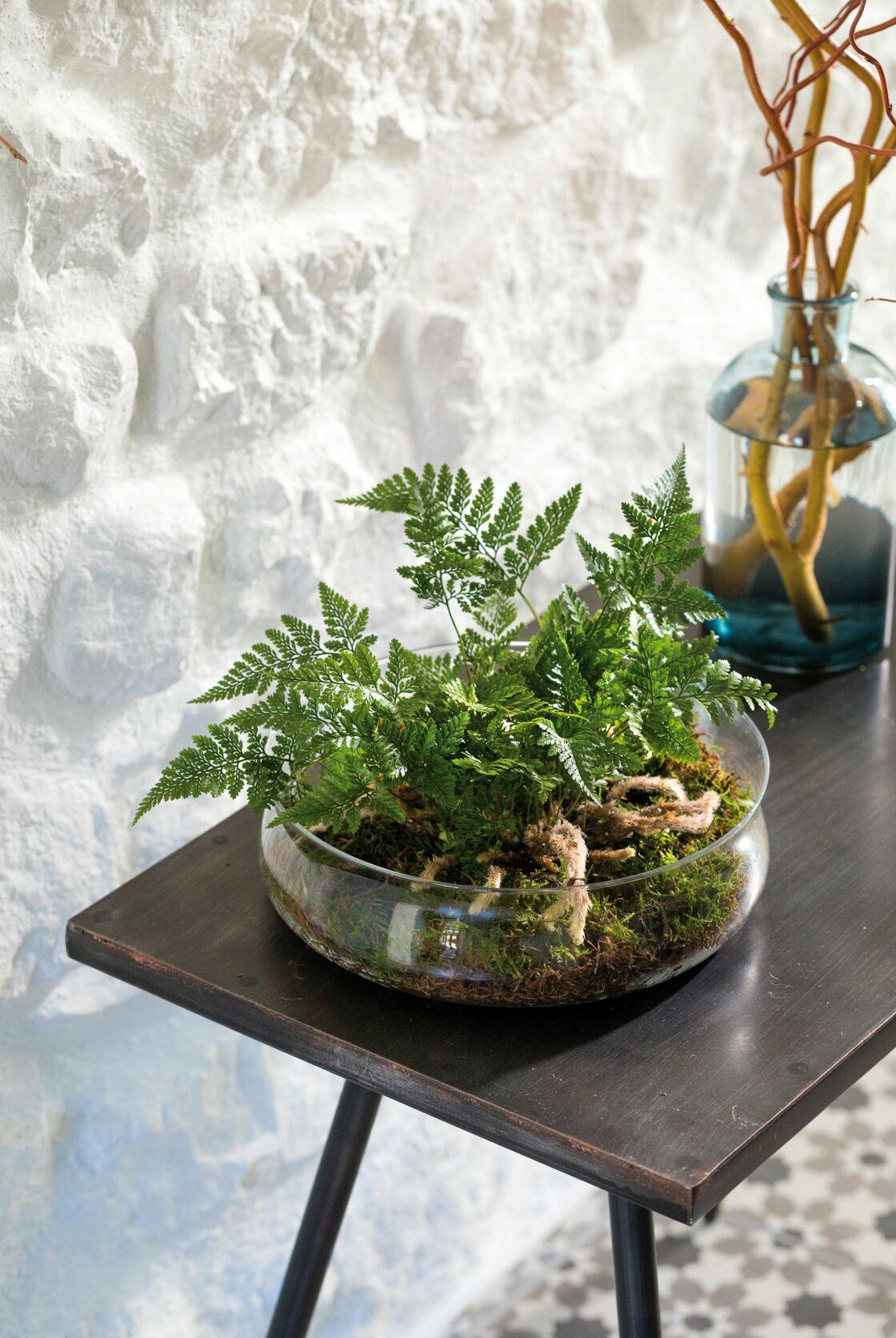 Comment Fabriquer Un Terrarium Pour Orchidee Ou Fougere Femme