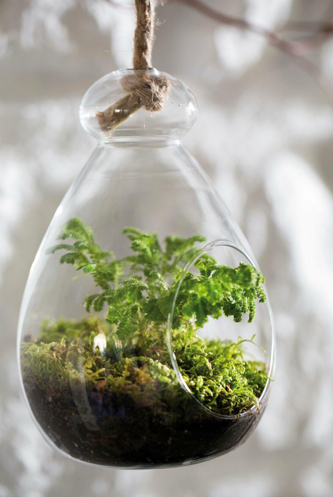 comment fabriquer un terrarium pour orchid u00e9e ou foug u00e8re     femme actuelle le mag