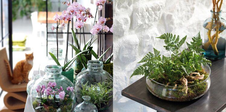 Comment fabriquer un terrarium pour orchidée ou fougère ?