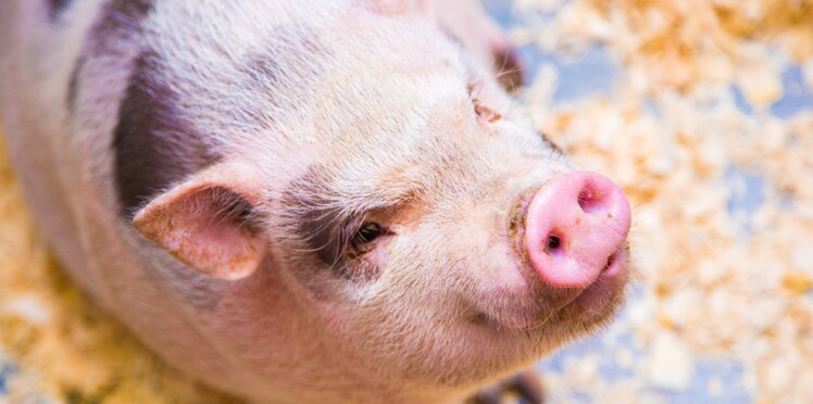 Mangeriez-vous de la viande si vous deviez la tuer ?