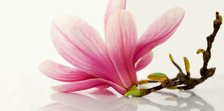 La Fleur de magnolia, l'ingrédient qui vous veut du bien