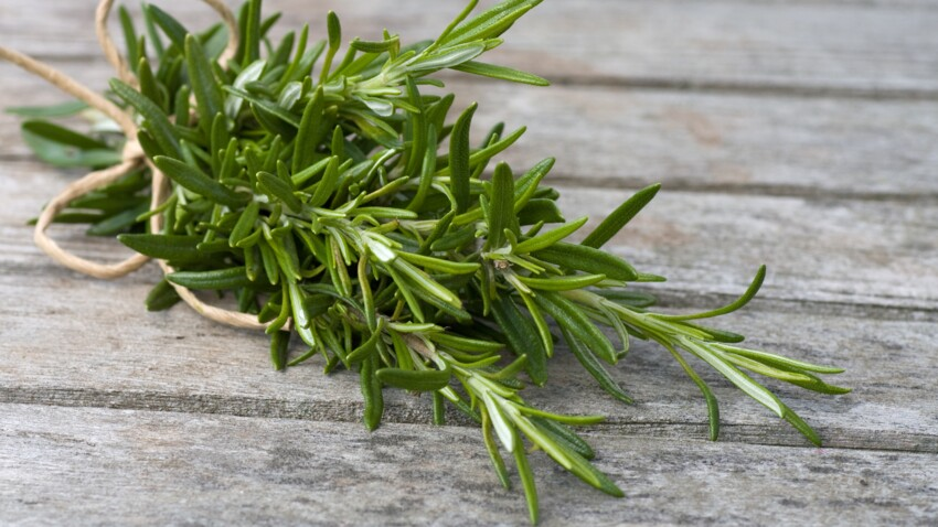 Rosemary: what are its health benefits?  : Current Woman The MAG