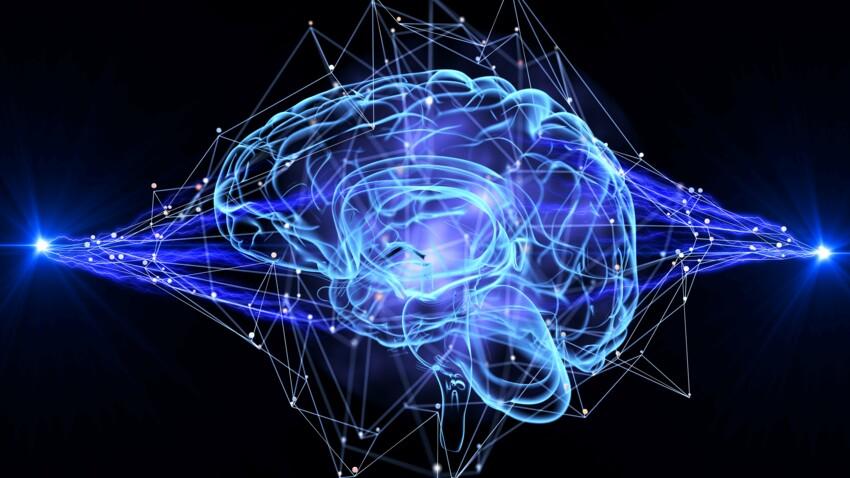 Notre cerveau produit des neurones jusqu'à… 90 ans !