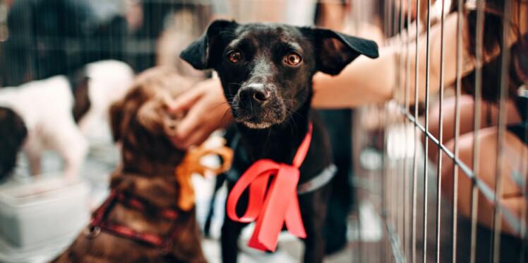 Une vente aux enchères de chiens saisis scandalise