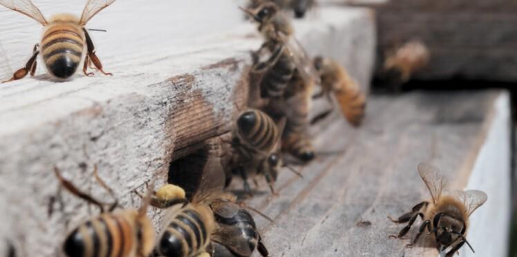 Elle consulte pour une infection oculaire et découvre 4 abeilles dans son oeil