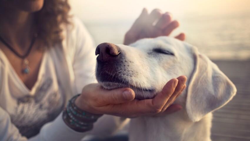 Zoonoses : quelles maladies peut me transmettre mon animal de compagnie ?