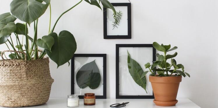 herbier sous verre un diy facile et pas cher femme. Black Bedroom Furniture Sets. Home Design Ideas