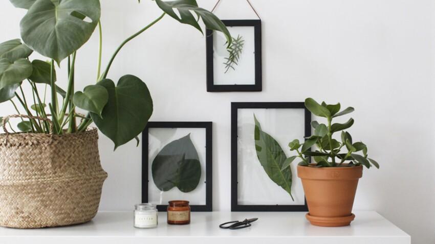 Herbier sous-verre, un DIY facile et pas cher