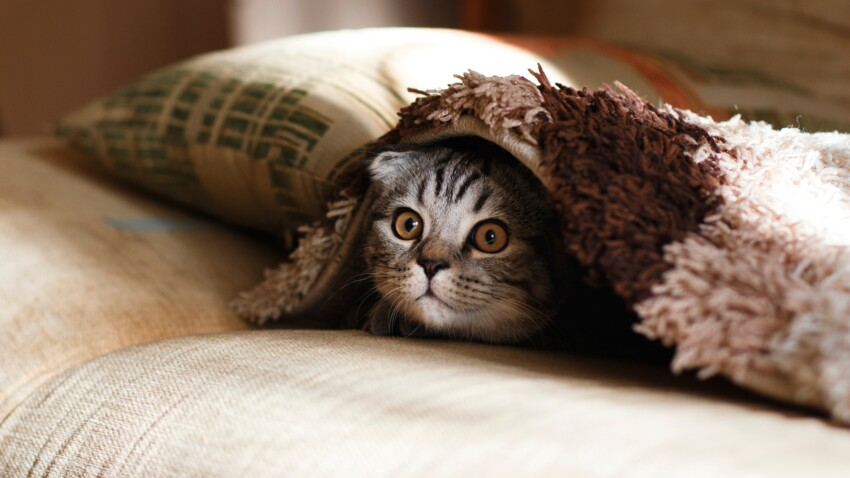 Ailurophobie : comment surmonter sa phobie des chats ?