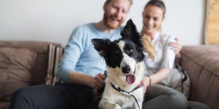 Partir en vacances sans son chien serait plus dur que de partir sans son mec