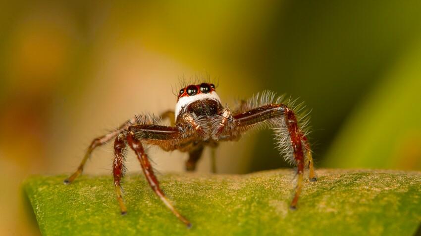 Arachnophobie : la science a trouvé une astuce surprenante pour vaincre sa peur des araignées