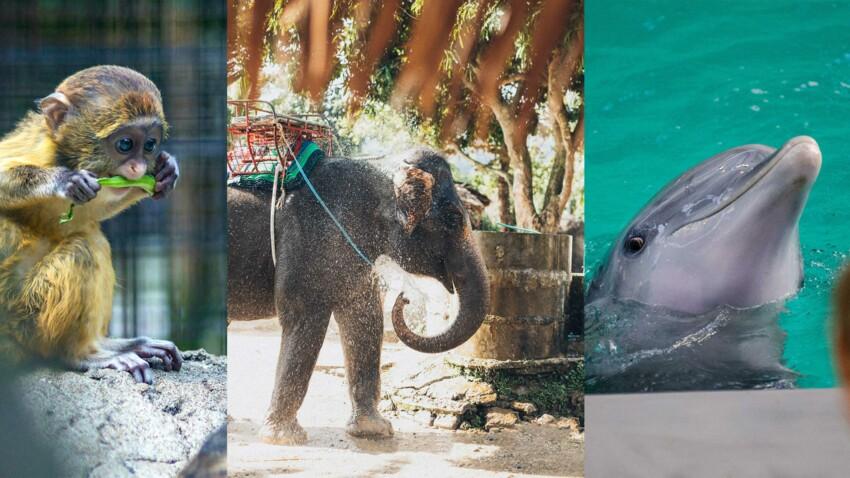 Les attractions touristiques les plus cruelles pour les animaux