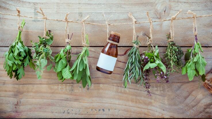 5 plantes médicinales à faire pousser chez soi