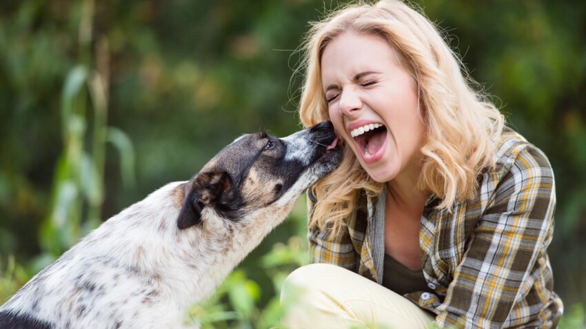 Découvrez pourquoi les coups de langue de votre chien peuvent être néfastes pour votre santé