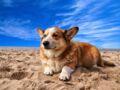 Comment gérer au mieux ses vacances avec son animal de compagnie ?