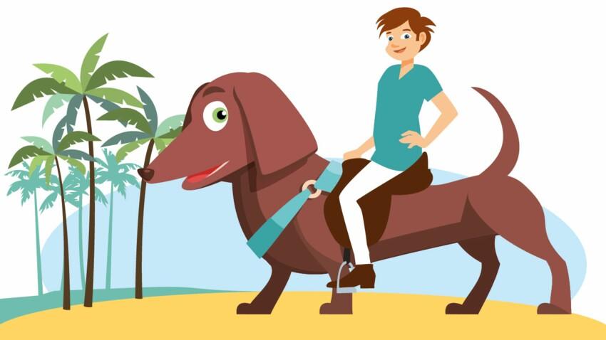 Quelles règles pour voyager avec mon animal ?