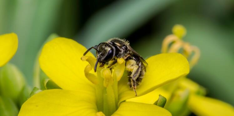 Les plantes sont capables d'entendre leurs pollinisateurs et de réagir