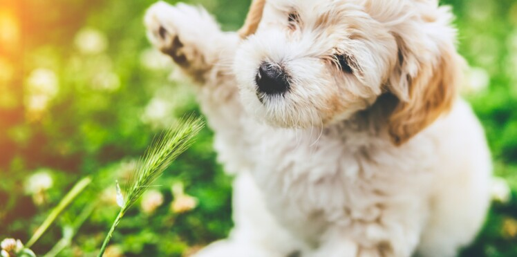 Propriétaire de chien / chat : 5 astuces pour être plus écolo