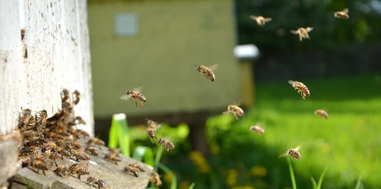 Attaqué par des centaines d'abeilles, un promeneur meurt des suites des piqûres