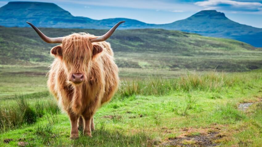 Voyage en Écosse, terre de légendes