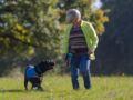 Association Handi'chiens : des toutous à tout faire
