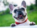 Invisible challenge : ce défi trop mignon pour piéger son chien