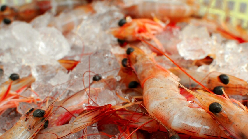 Fruits de mer : comment les choisir et les préparer ?