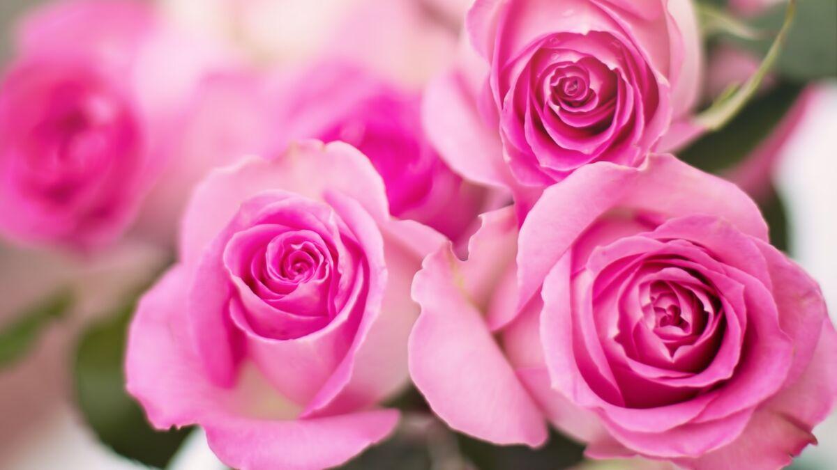 Comment Faire Secher Une Rose Fraiche comment cuisiner la rose : nos astuces et recettes : femme