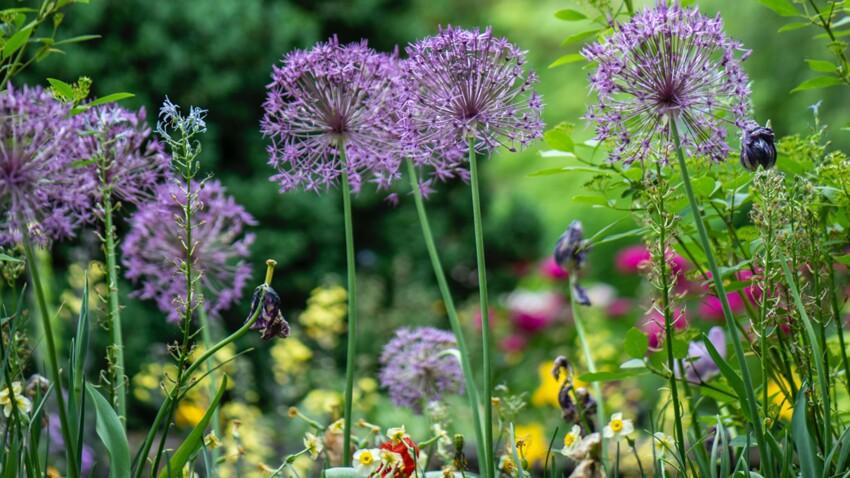 Comment jardiner sans polluer et sans dépenser
