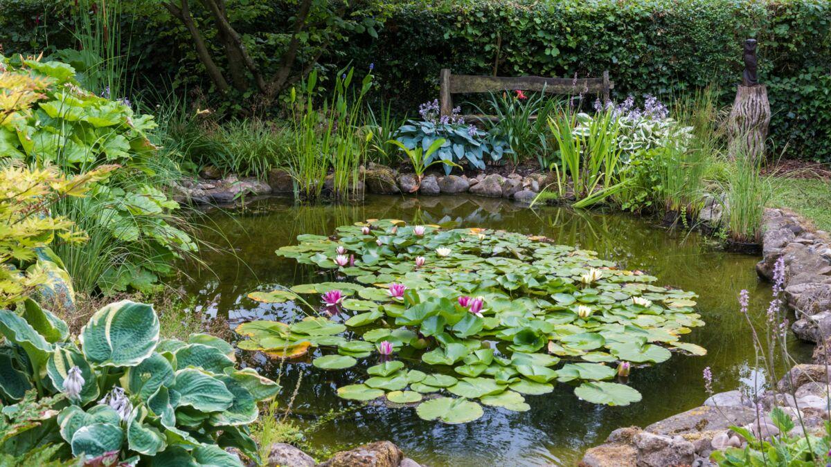 Bassin Préformé Hors Sol bassin de jardin : 10 conseils pour l'aménager : femme