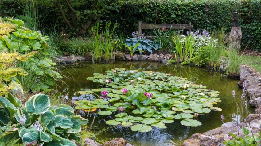 Bassin de jardin : 10 conseils pour l'aménager
