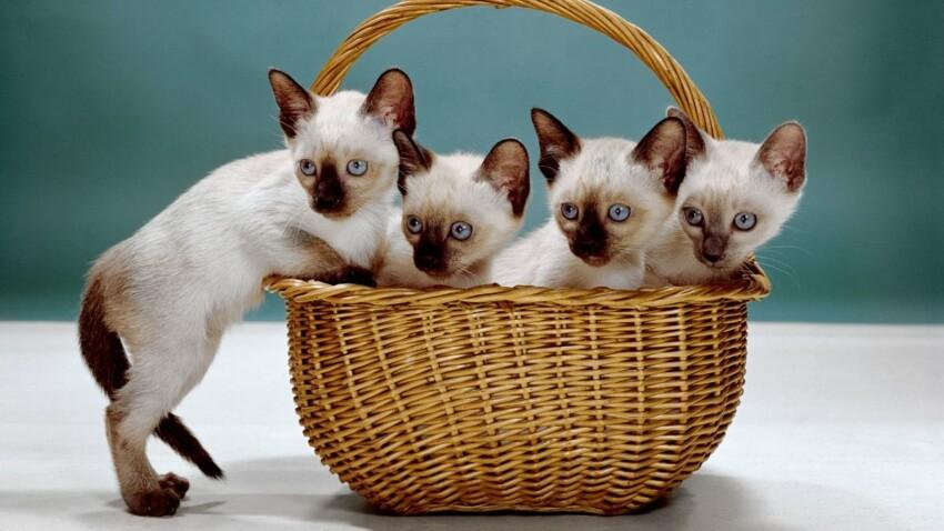 Le photographe animalier Walter Chandoha publie ses plus beaux clichés de chats