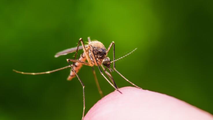 Aromathérapie : 5 huiles essentielles efficaces contre les moustiques
