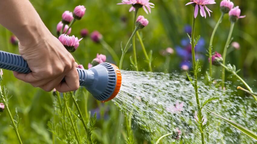 Les 8 erreurs à éviter en arrosant les plantes du jardin