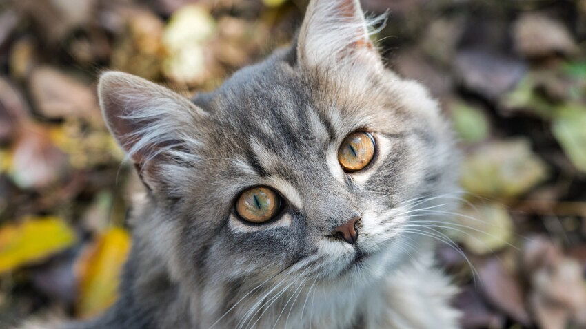 Allergie aux poils de chats: comment reconnaître les symptômes?